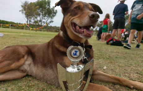 My dog Pace and his obedience trophy
