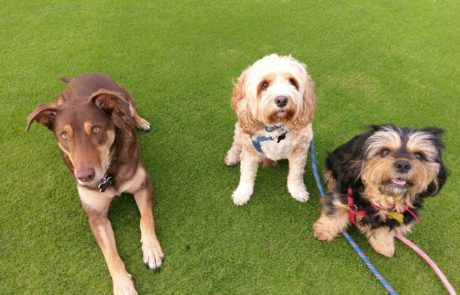 Good doggies: Pace, Finnigal and Jasper