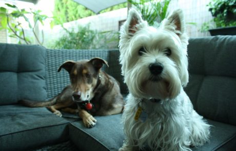 Doggies: Issy and Pace