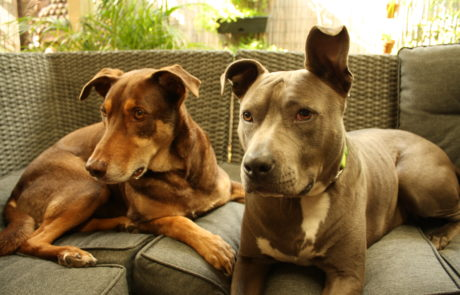 Canine pals: Kali and Pace