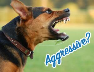 Dog-Reactivity-Class-Aggressive