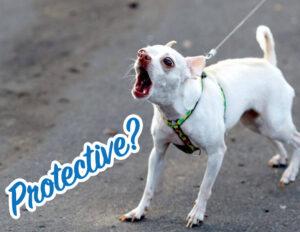 Dog-Reactivity-Class-Protective