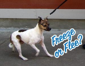 Dog-Reactivity-Class-Freeze-or-Flee