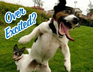 Dog-Reactivity-Class-Over-Excited